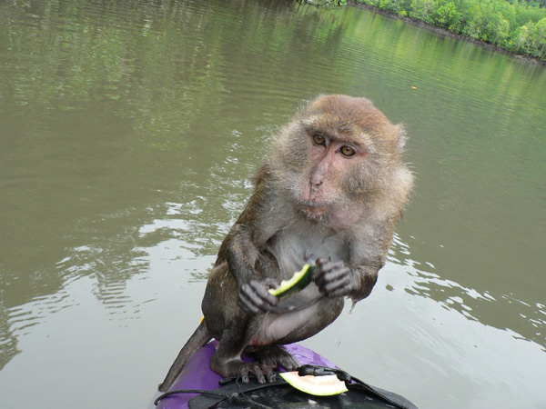 monkey on our kayak